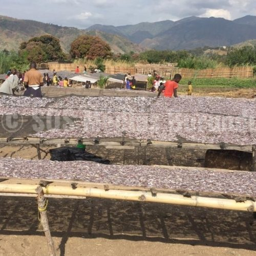 Lusenda (RDC) : le lac Tanganyika, une source de revenus pour les réfugiés burundais du camp de Lusenda