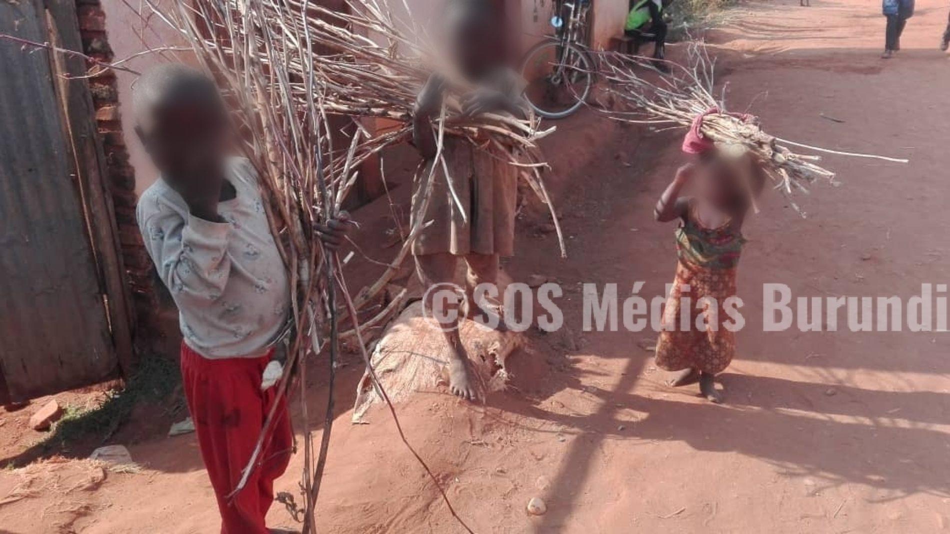 MAKAMBA : Trouver le bois de chauffage devient un casse-tête pour des habitants