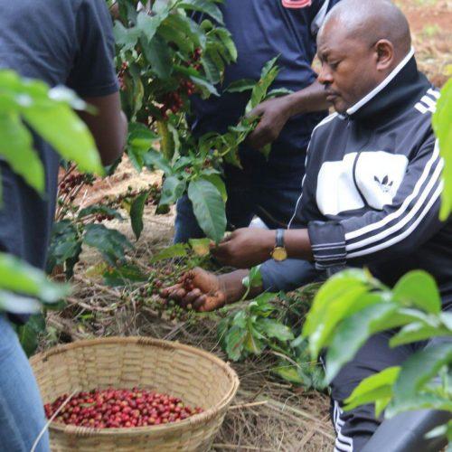 Le président Nkurunziza donne deux semaines pour remettre l'ordre dans le secteur café