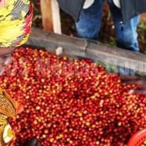 Le gouvernement burundais retire ses actions des sociétés privées gestionnaires du café