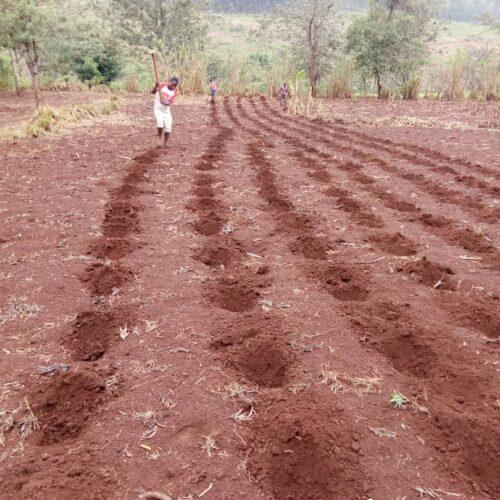 Karusi : un cultivateur exproprié et interpellé par la police à Buhiga