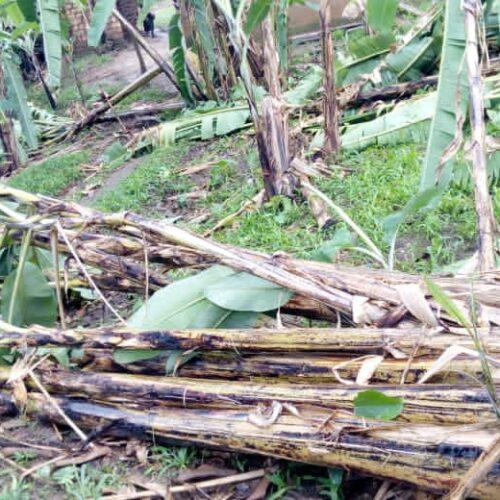 Murwi: des pluies torrentielles ont détruit plusieurs maisons et champs