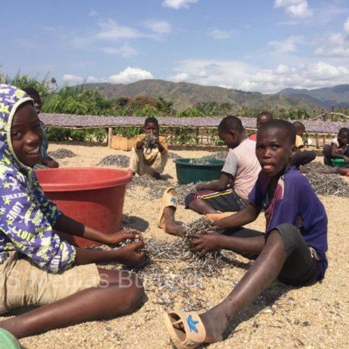 PHOTO DE LA SEMAINE: Lusenda : des enfants n'étudient plus, ils travaillent pour aider leurs parents