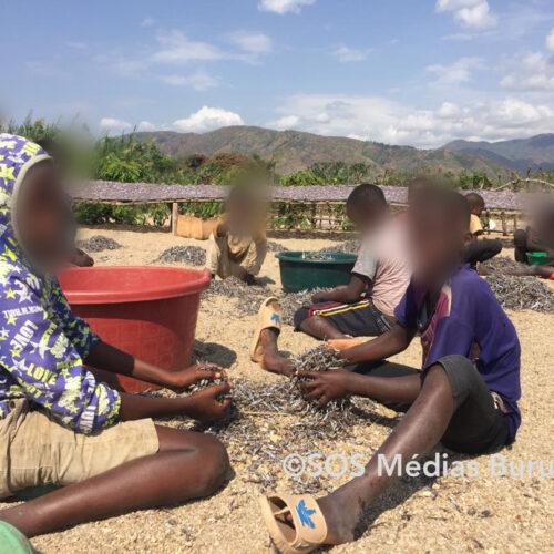 Instantané – Lusenda: ils n'étudient plus, ils travaillent pour aider leurs parents