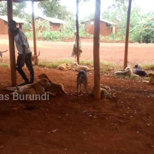 Nyarugusu (Tanzanie) : une campagne de vaccination des chiens qui frustre