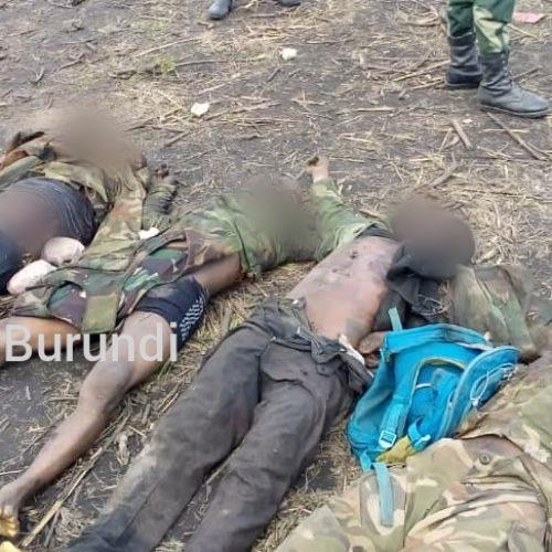 Rwenzori (RDC) : au moins dix rebelles tués