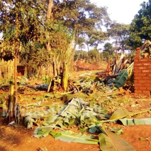 Mtendeli (Tanzanie) : la police supervise la destruction des maisons des réfugiés réinstallés à Nduta