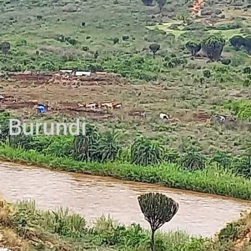 Plaine de la Rusizi : des crépitements d'armes à la frontière entre le Burundi et la RDC